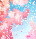 【背景】桜吹雪