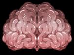 【アイテム・オブジェクト】脳みそ 透過素材